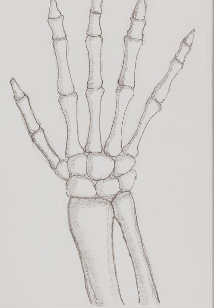 Hand Bones Sketch by inkstress