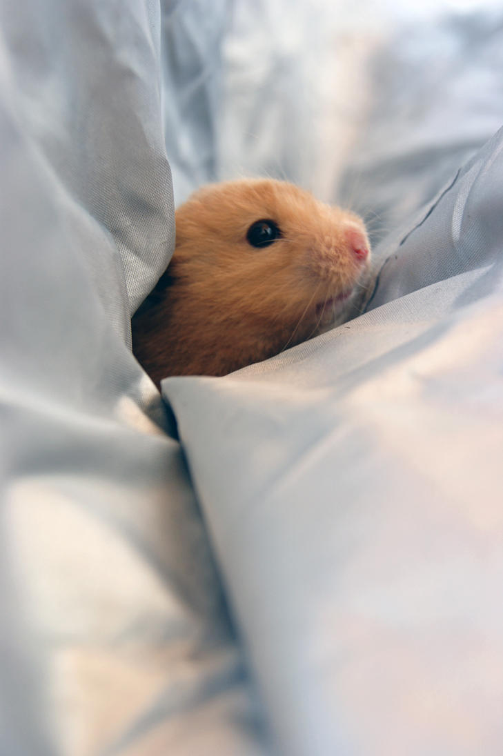 mousey the hamster by Duckmad