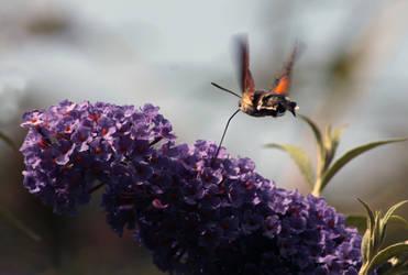 Vlinder by Mellifera-imiya