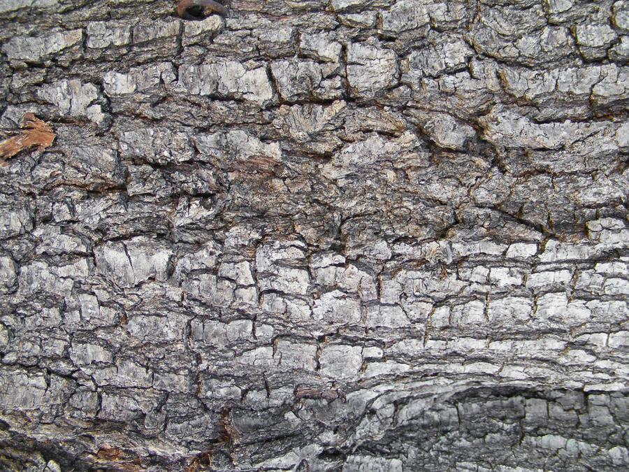 Bark Textures 04