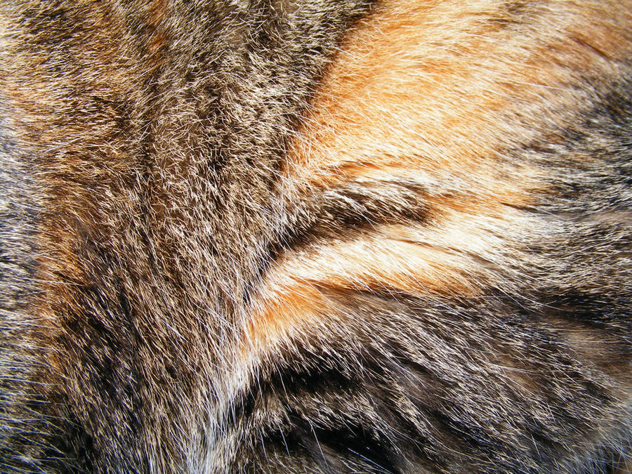 Fur Textures 01