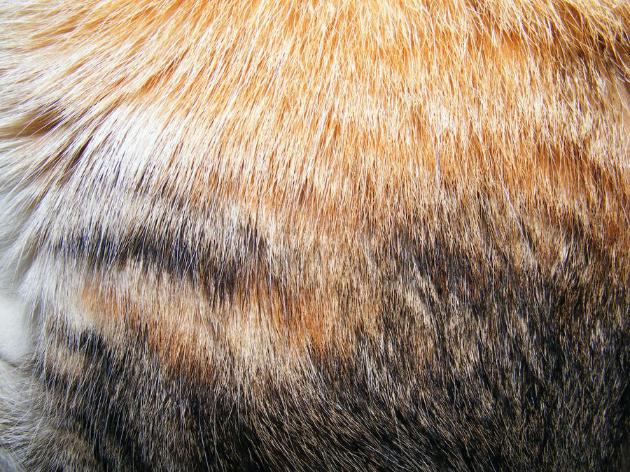 Fur Textures 03