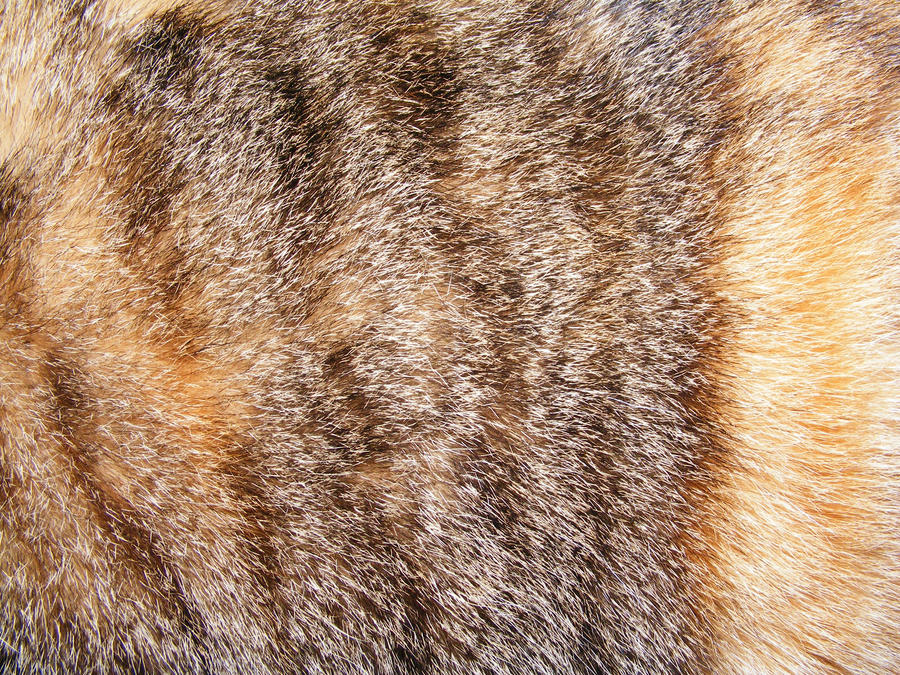 Fur Textures 04 by DKD-Stock