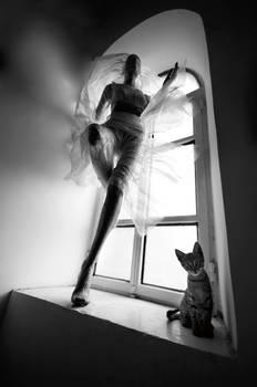 street cat...