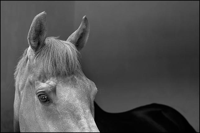 black - white by salihguler