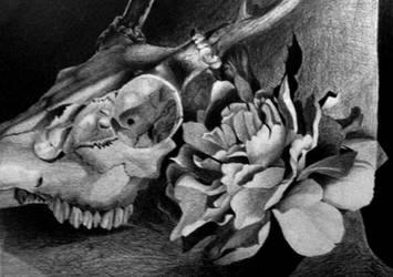 Still Life of Skull and Flower with Graphite by myshrinkingviolet