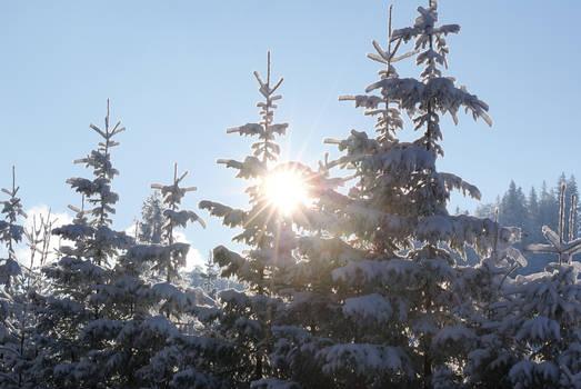 Snow 16