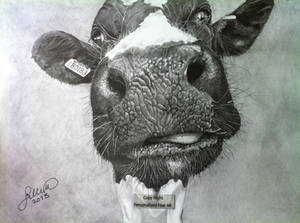 'My Old Cow' - 2013 - (Drawing)