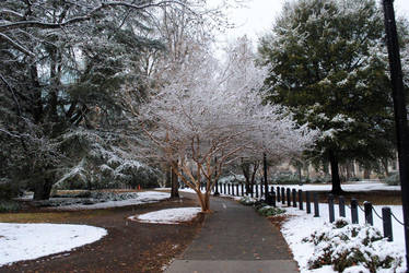 Snowy Statehouse Grounds 2010