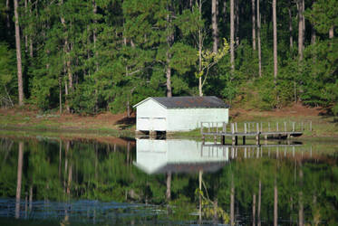 Shed reflections