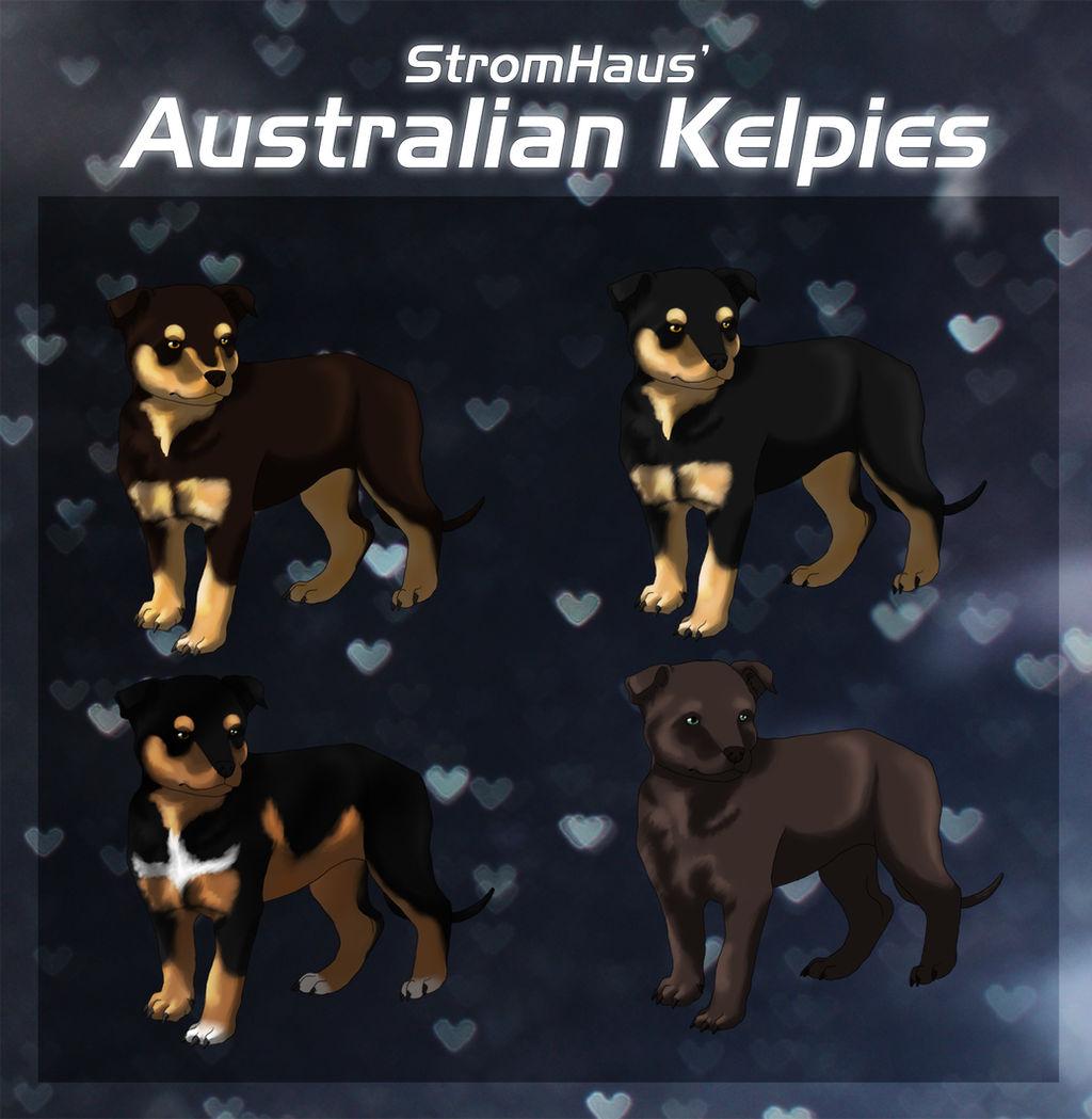 Australian Kelpie Puppy Imports By Elitnistraze On Deviantart