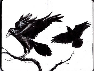 Moleskine #4 - Ravens