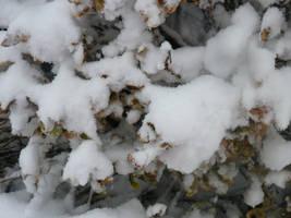Snow Leafs