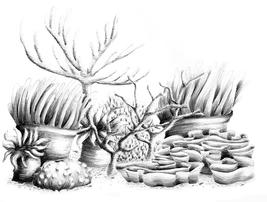 Coral Reef By Appeltjesgroen ...