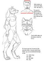 Anthro Werewolf Tutorial by KMoongangSR