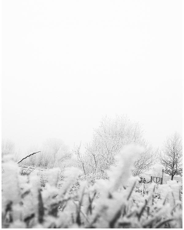 winter by alex16