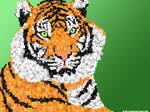 block tiger