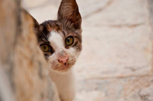 Ulcinj Cat 2 by Robson2510