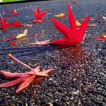 Autumn's Fall...