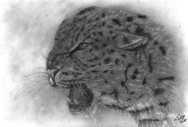 The Predator by TessJa