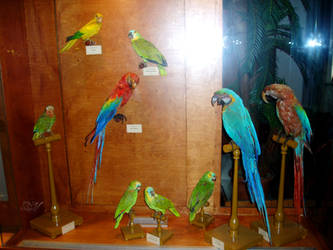exotic birds at Natural History Museum by Scaloperion