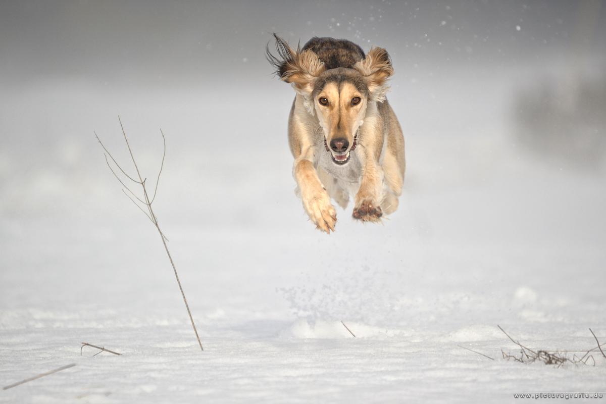 run n fun by Wolfruede