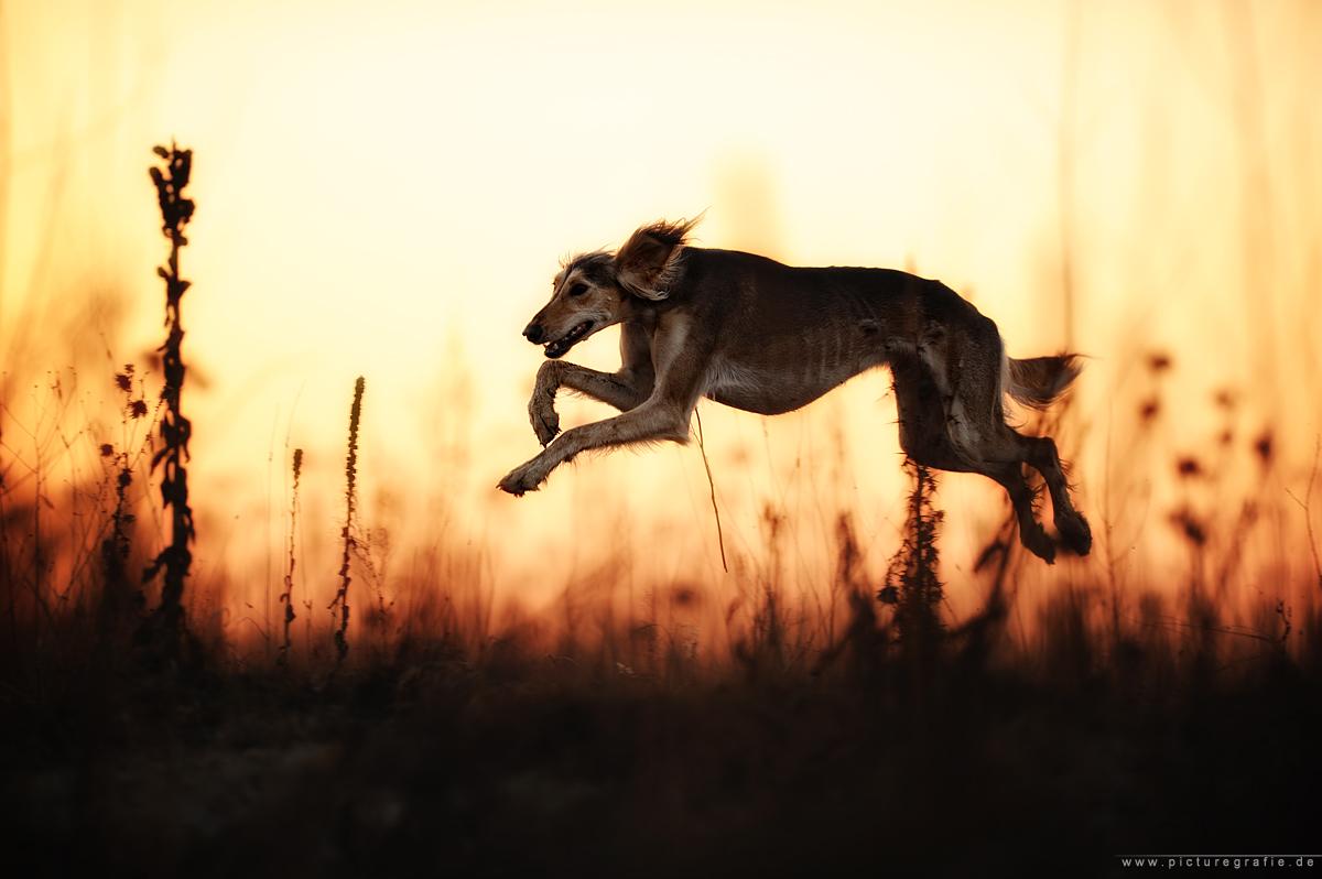 sundown by Wolfruede