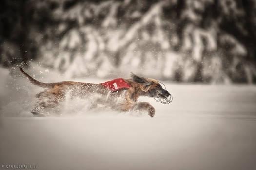 snowcoursing