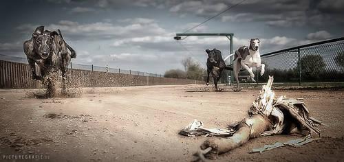 absolut greyhound