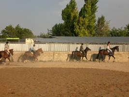 1,82 m high mare