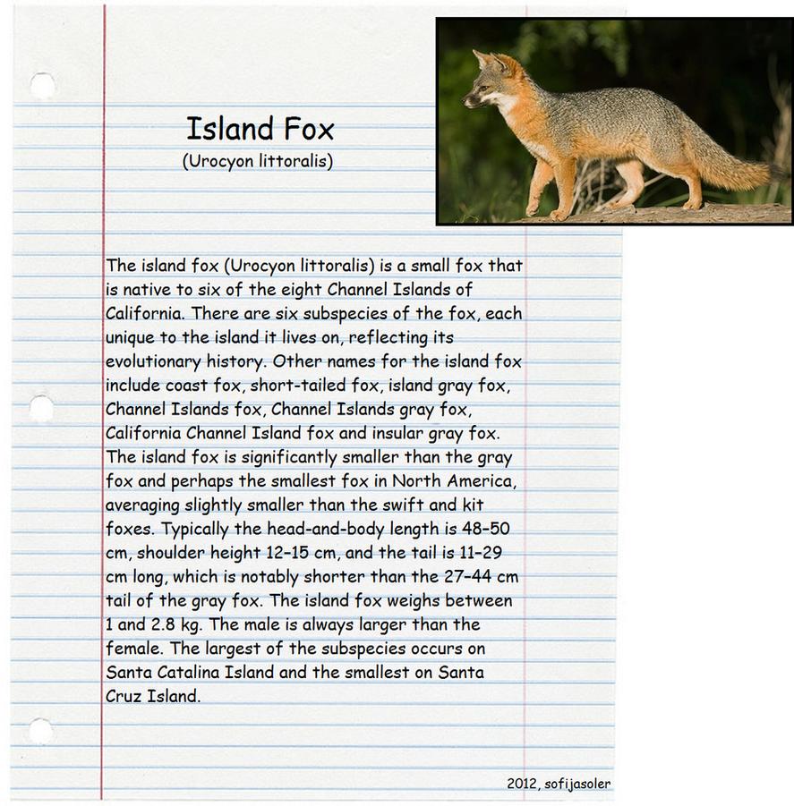 Island Fox by sofijasoler