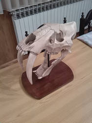 Smilodon fatalis sabertooth skull sculpt 1 by TKnockers