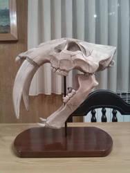 Smilodon fatalis skull sculpt 2 by TKnockers