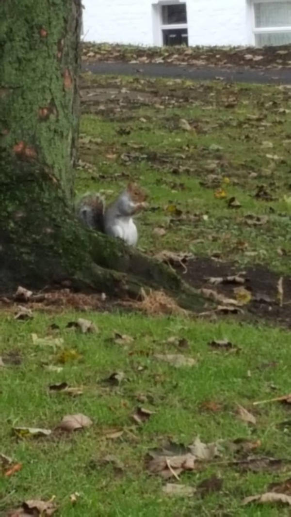 squirrel by fireman5