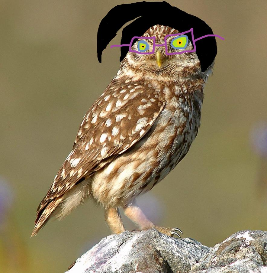 Owl Kelly by FUUNNYJOKE