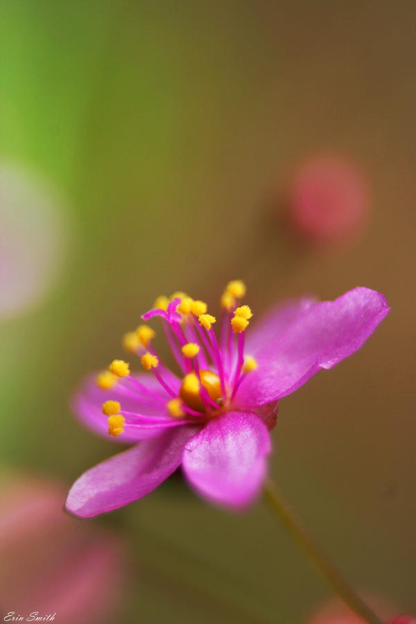 Wild Flower by engridearty
