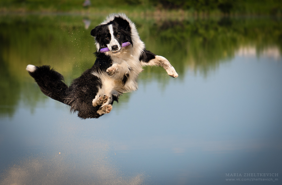 jump by Zheltkevich