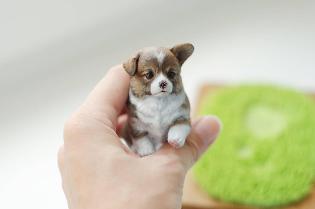 Little corgi