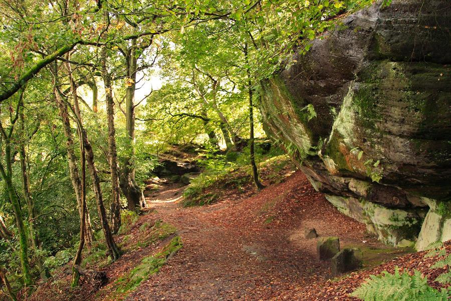 Woodland Path By Ravensummerisle On Deviantart