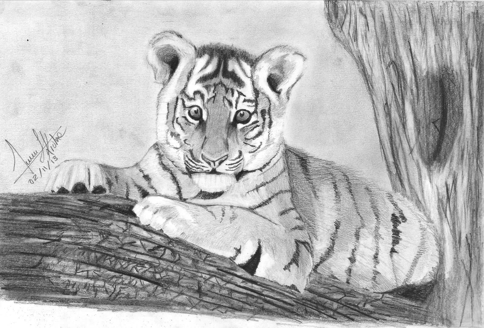 baby tiger draw 25 by juansk on deviantart