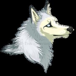 Ayip Headshot by Wolf-Trek