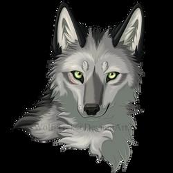 Keinan Headshot by Wolf-Trek