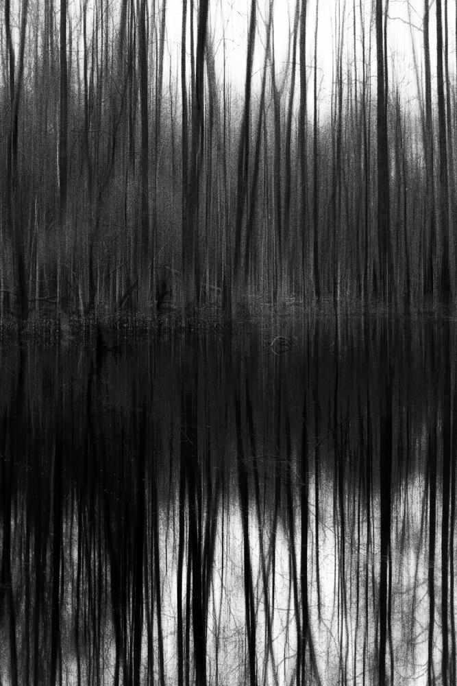 Thielenbruch Swamp 6 | Abstract by JacktheFlipper-de