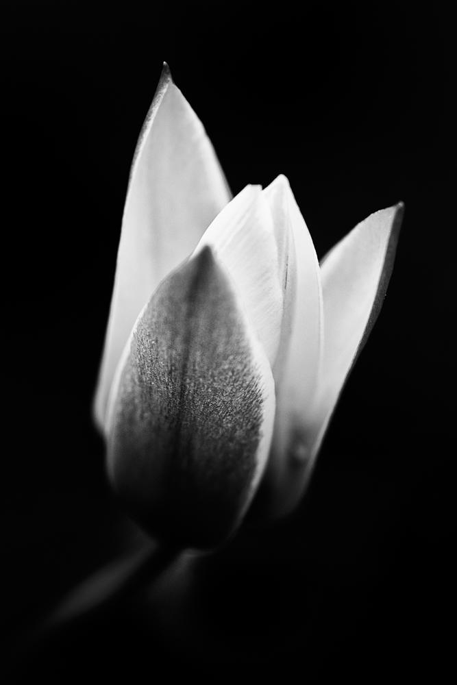Flower 24   Flora by JacktheFlipper-de