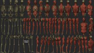 AnatomyStudyParts