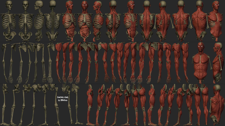 AnatomyStudyParts by 3DNeksus