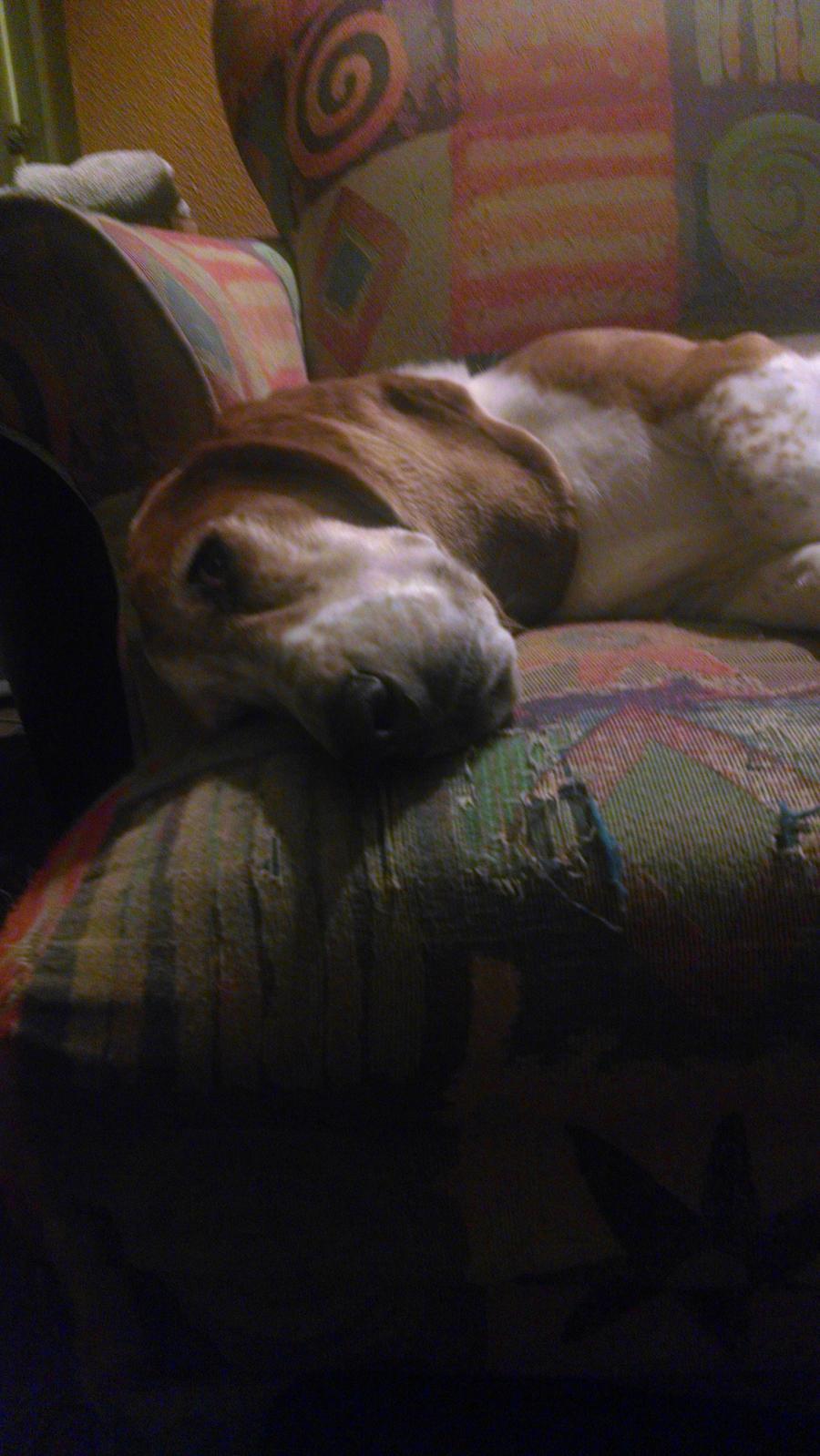 Rufus asleep by VioletTutu