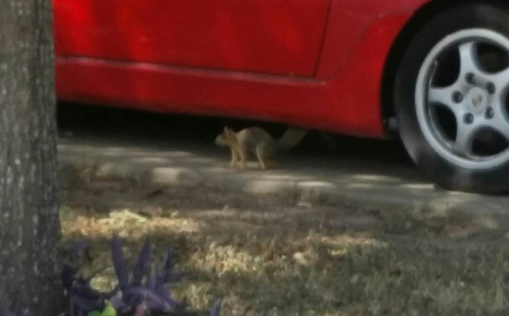 mr. squirrel is scared by VioletTutu