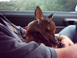 Jet as a Fawn