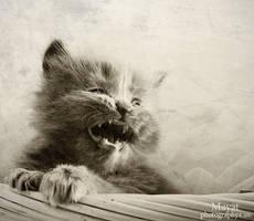Kitten -1- by mayat-s